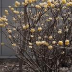 Unique plants for your winter landscape