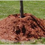 Volcanoes are for mountains, not trees and shrubs!    Don't over mulch your landscape