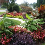 Create a Garden That Thrives in the Marietta GA Area