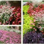 Tips for Atlanta Cool Season Pots and Planters
