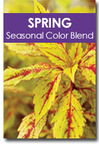 Spring Seasonal Color Blend Cover