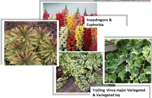 2013 Fall Pots and Planter Blends2