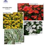 Spring 2014 Atlanta Landscape Color Combinations – 2
