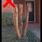 Atlanta Landscaping: How to Prune Your Crape Myrtle