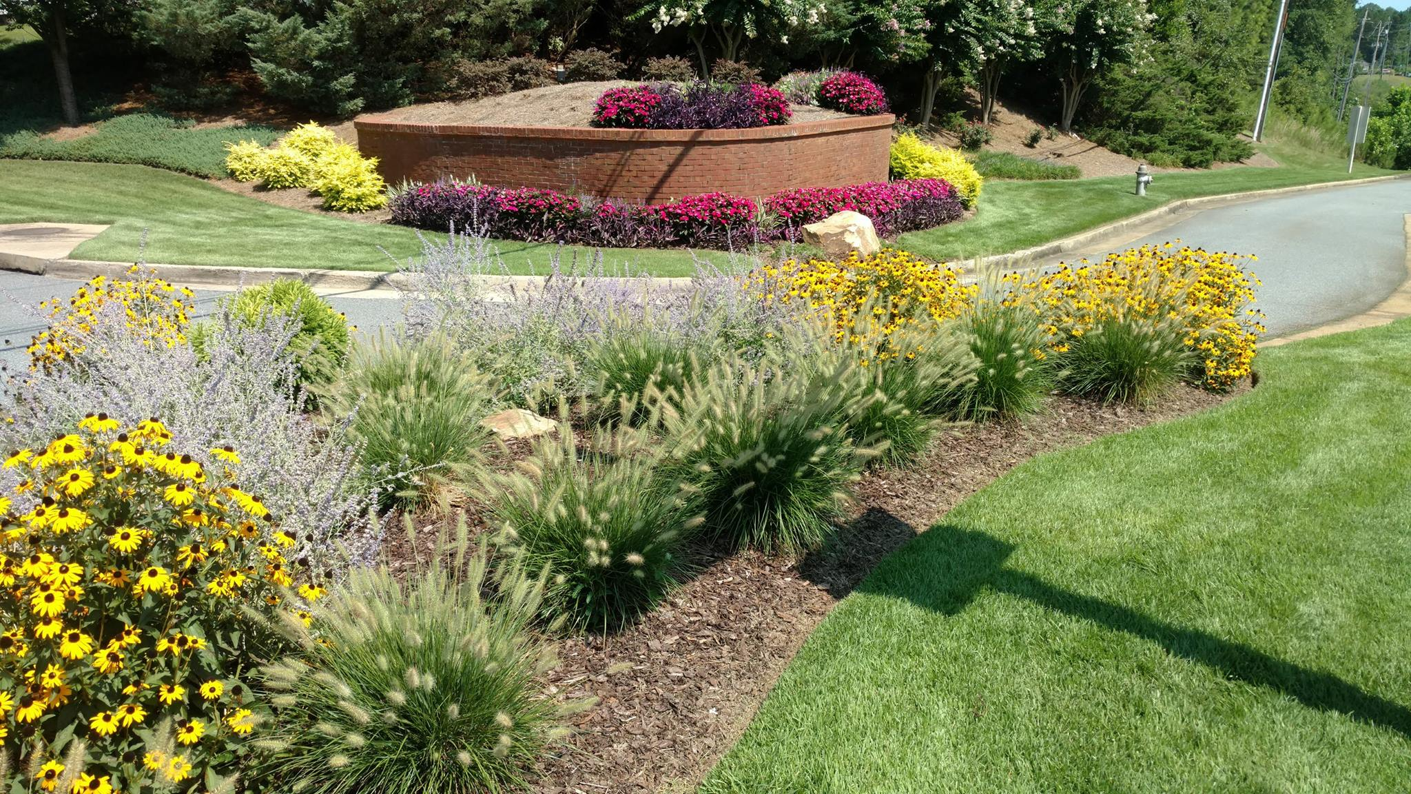 Add a pop to your landscape with these dependable for Dwarf grasses perennials